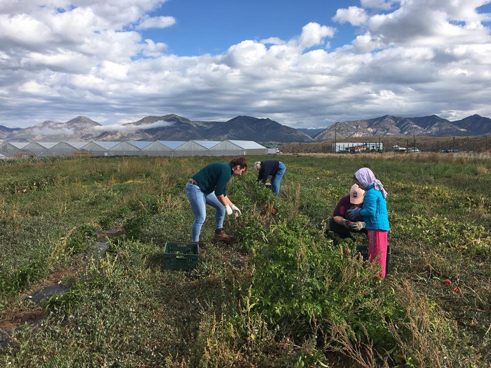Ella Sanders, Agricultural Land Policy in Western Colorado