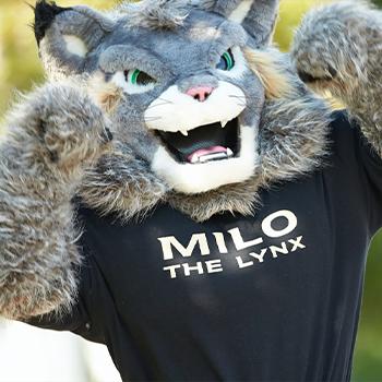 Milo the Lynx News Piece